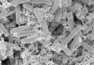 nanofactories